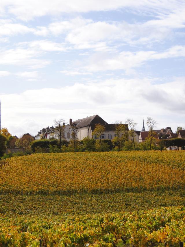 Vignoble Auxerre Clos de la Chaînette