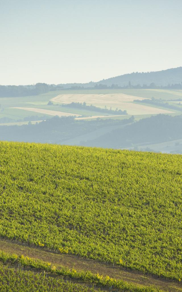 coulange-la-vineuse-08062015-0040.jpg